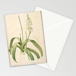 ornithogalum lacteum Redoute Roses 2 Stationery Cards