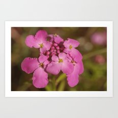 Pink Flowers with Yellow Stamen Art Print