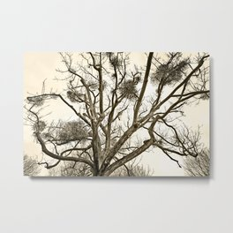 Leafless Tree in Winter I Metal Print