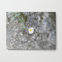 White flower on the stone Metal Print