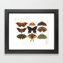 Moth Wings III Framed Art Print