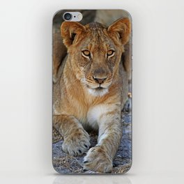 Young lion - Africa wildlife iPhone Skin