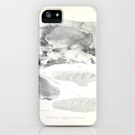 The Zoology of the Voyage of H.M.S. Beagle 1840 - Fossil Mammalia - Scelidotherium Dentition iPhone Case