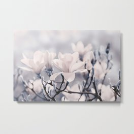 Magnolia gray 116 Metal Print