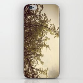 Sunlight & Branches iPhone Skin