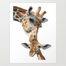 Mother And Baby Giraffe Art Print