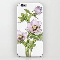 Hellebore iPhone & iPod Skin
