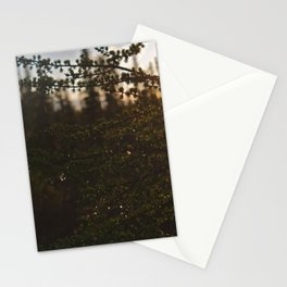 Larch Stationery Cards