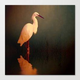 Midnight Egret Canvas Print