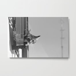 Curious Cat of Matera Metal Print