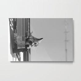 Curious Cat of Matera Metal Print