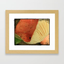 Big Red * Mushroom  Framed Art Print
