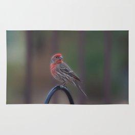 Pretty Bird - House Finch Rug