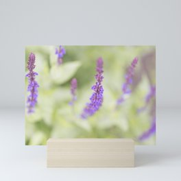 Salvia Flowers 2 Mini Art Print