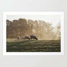 Sheep in fog at sunrise. Troutbeck, Cumbria, UK. Art Print