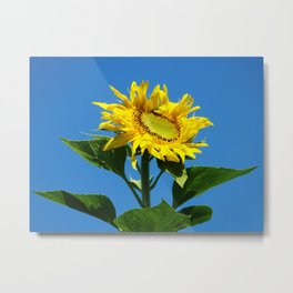 Standing shameless in the air Metal Print