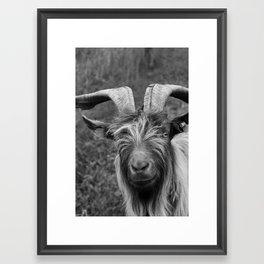 Billy-Goat no.1 Framed Art Print