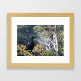 Black Currawong Framed Art Print