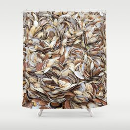 Scallop Shells Shower Curtain