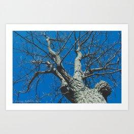 Treeloutte #2 Art Print