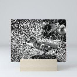 Leader - Black & White Mini Art Print