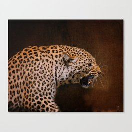 Snarling Leopard Canvas Print