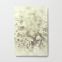 hedge blossoms Metal Print