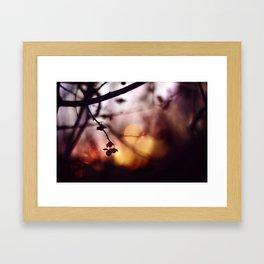 Autumn's glow Framed Art Print