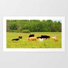 family of cows  Art Print