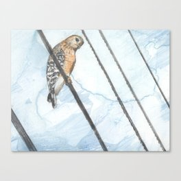 Bird on Wire Canvas Print