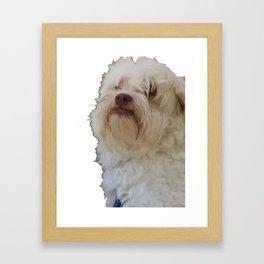 Grumpy Terrier Dog Face Framed Art Print