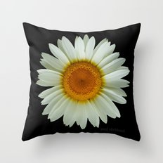 Summer White Daisy on Black Throw Pillow