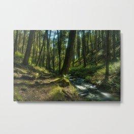 Forrest Metal Print