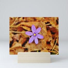 Liverwort flower Mini Art Print