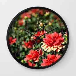 VIBRANT RED DAHLIAS - IN THE LATE SUMMER SUNSHINE Wall Clock