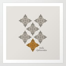 Stella Ophiuroidea Art Print