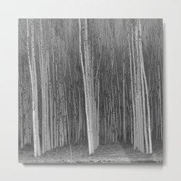 Poplars. Sun Through The Fog. Misty Morning Metal Print