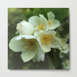 Fragrant Flower Elegance Metal Print