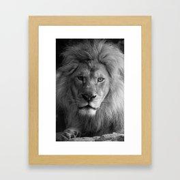 A Lion's Gaze Framed Art Print