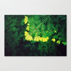 Deep in the Forest Canvas Print
