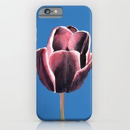 Red Violet Tulip in Watercolor iPhone Case