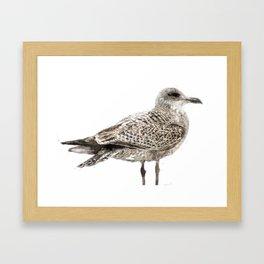 Brighton gull Framed Art Print
