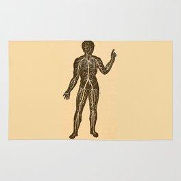 Circulatory system. Rug