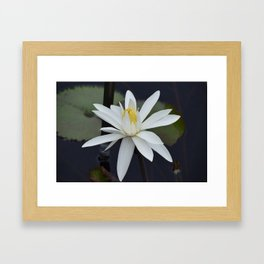 Water Lily White Framed Art Print