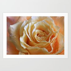 Honey Peach Rose Art Print