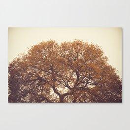 Yellow Canvas Print