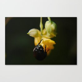 beetle macro Canvas Print