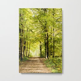 A pathway covered by leaves in a magical forest Metal Print