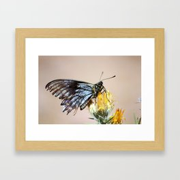 Butterfly with torn wings Framed Art Print