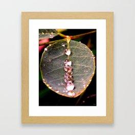 Water Drops Leaf Framed Art Print